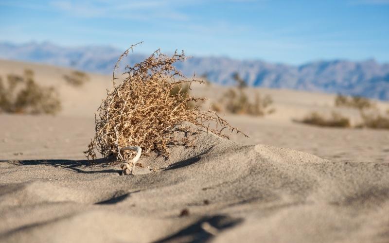 California Desert-298710-edited